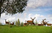 Deer flock in natural habitat — Stock Photo