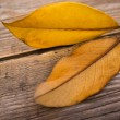 Royalty-Free Stock Photo: Autumn leaves on wooden background