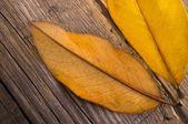 Feuilles d'automne sur fond en bois — Photo