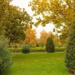 Beautiful autumn day in park — Stock Photo