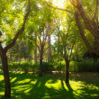 Trees on sunny day in park — Stock Photo