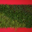 Green grass close-up on red background — Stock Photo