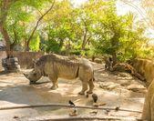: Rhino i zoo på solig dag — Stockfoto
