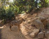 Wolf in natuurlijke habitat — Stockfoto