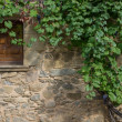 Royalty-Free Stock Photo: Wild grape growing over wall with small window