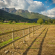 Small wooden fence in field — Stock Photo #15929801