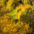 Close-up of colorful autumn trees — Stock Photo