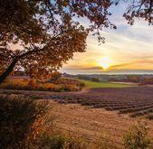 Piękny jesienny lawendowe pole — Zdjęcie stockowe