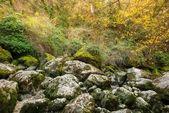 View of moss-grown rocks — Stock Photo