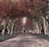 красивая аллея с особняк — Стоковое фото