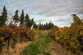 Beautiful vineyard landscape view — Stock Photo