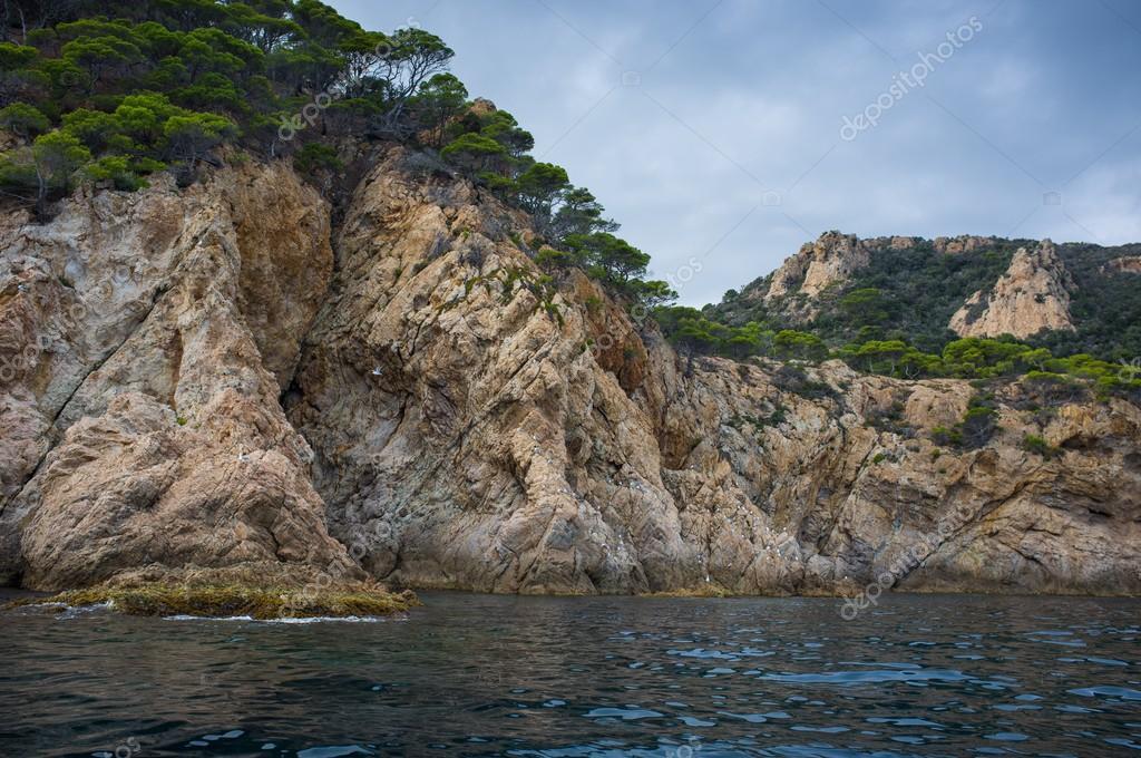 树木生长在海边岩石上 - 图库图片