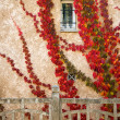 Beautiful red leaves on house wall - Stock Photo
