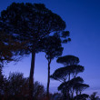 Trees over night sky — Stock Photo