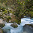 Fast river in Fontaine-de-Vaucluse, France — Stock Photo #19606415