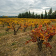 Beautiful vineyard landscape view - Stock Photo