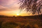 Autumn lavender field on sunset — Stock Photo