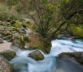 Fast river in Fontaine-de-Vaucluse, France — Stock Photo