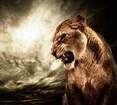 Lionne rugissante contre ciel orageux — Photo