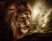 Wild animal — Stockfoto