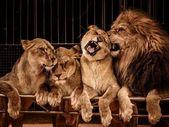 Divoké zvíře — Stock fotografie