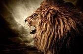 Vahşi hayvan — Stok fotoğraf