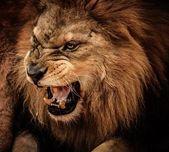 Wilde dieren — Stockfoto