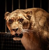Wild animal — Stock Photo