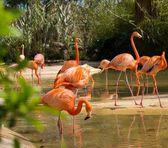Rosa flamingos — Stockfoto
