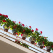 Beautiful flower pots hanging on balcony&#039;s rails - Stock Photo