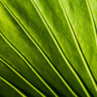 Close-up of a green plant leaf - Foto Stock