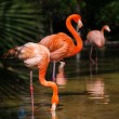 Group of pink flamingos near water - Stockfoto