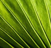 Close-up of a green plant leaf — Stock Photo