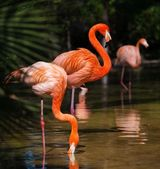 Group of pink flamingos near water — Стоковое фото