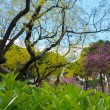 Beautiful trees and plants in a park - ストック写真