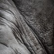 Rhinoceros skin texture - Stock Photo