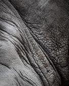 Rhinoceros haut textur — Stockfoto