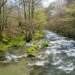 Fast little river in mountain forest — Stock Photo #25852139