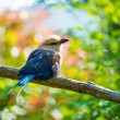 Beautiful little bird sitting on a tree branch — Stock Photo