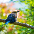 Beautiful little bird sitting on a tree branch — Stock Photo #25852527
