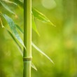 Close-up of a bamboo plant — Stock Photo #25852559