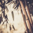 Stock Photo: Toned picture of a bamboo plant