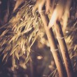 Toned picture of a bamboo plant — Stock Photo #25852815