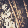Toned picture of a bamboo plant — Stock Photo
