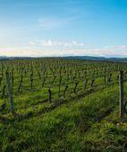 Vingården syn på en vacker vårdag — Stockfoto
