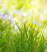 Green grass close-up on sunny day — Stock Photo