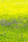 Piękne fioletowe kwiaty na łące — Zdjęcie stockowe