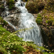 Fast little river in mountain forest — Stock Photo