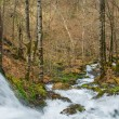 Fast river in forest — Stockfoto