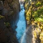 Rio rápido na floresta de montanha — Foto Stock